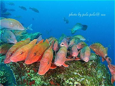 f:id:polepole-at-sea:20210328173635j:plain