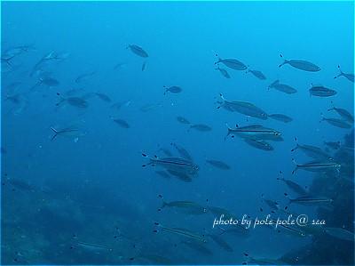 f:id:polepole-at-sea:20210416110909j:plain