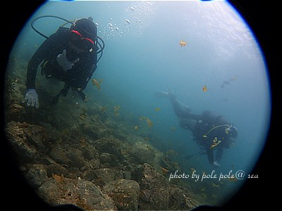 f:id:polepole-at-sea:20210423230259j:plain