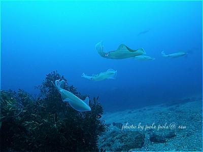 f:id:polepole-at-sea:20210429213222j:plain