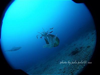 f:id:polepole-at-sea:20210429213410j:plain