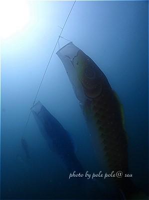 f:id:polepole-at-sea:20210505002814j:plain