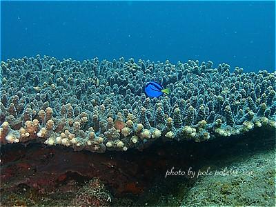 f:id:polepole-at-sea:20210505002851j:plain