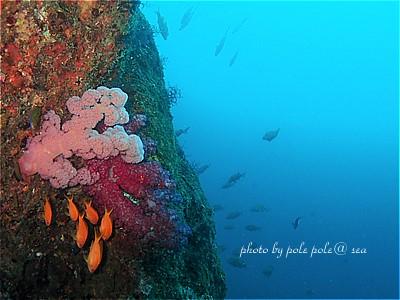 f:id:polepole-at-sea:20210506002142j:plain