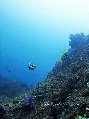 f:id:polepole-at-sea:20210506002214j:plain