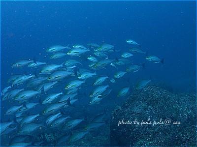 f:id:polepole-at-sea:20210506163524j:plain