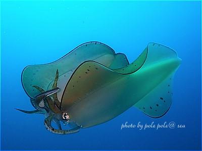 f:id:polepole-at-sea:20210506163807j:plain