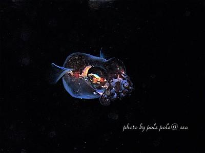 f:id:polepole-at-sea:20210507131754j:plain