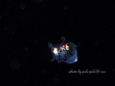 f:id:polepole-at-sea:20210507131816j:plain