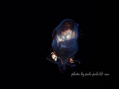 f:id:polepole-at-sea:20210507131834j:plain