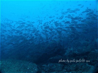 f:id:polepole-at-sea:20210514225536j:plain