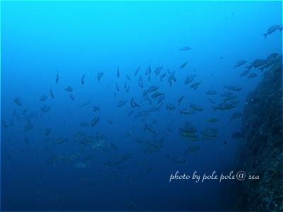 f:id:polepole-at-sea:20210519180507j:plain
