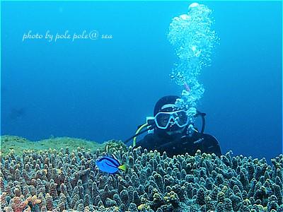 f:id:polepole-at-sea:20210519180738j:plain