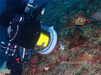 f:id:polepole-at-sea:20210524075448j:plain