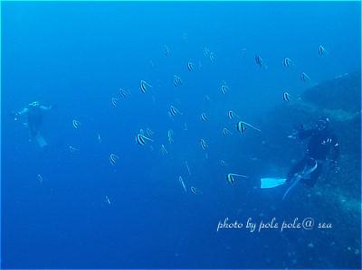 f:id:polepole-at-sea:20210524080122j:plain