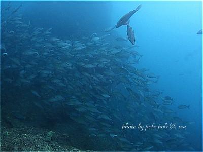 f:id:polepole-at-sea:20210524080152j:plain