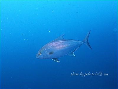 f:id:polepole-at-sea:20210526202212j:plain