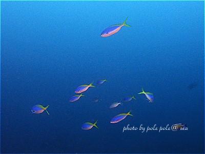 f:id:polepole-at-sea:20210527142544j:plain