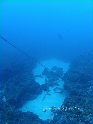 f:id:polepole-at-sea:20210606093916j:plain