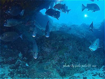 f:id:polepole-at-sea:20210606094025j:plain