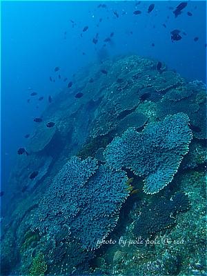 f:id:polepole-at-sea:20210606094050j:plain
