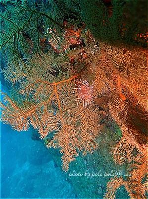 f:id:polepole-at-sea:20210911001854j:plain