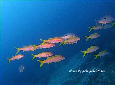 f:id:polepole-at-sea:20210917002616j:plain
