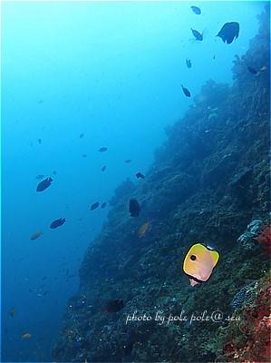 f:id:polepole-at-sea:20210917002842j:plain