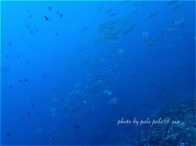 f:id:polepole-at-sea:20211010231359j:plain