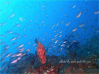 f:id:polepole-at-sea:20211013184513j:plain