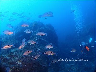 f:id:polepole-at-sea:20211013184736j:plain