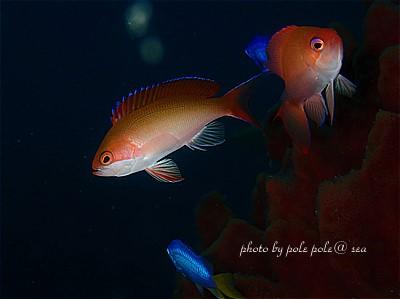 f:id:polepole-at-sea:20211015231807j:plain