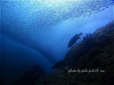 f:id:polepole-at-sea:20211016203021j:plain