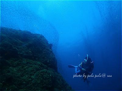 f:id:polepole-at-sea:20211016203728j:plain
