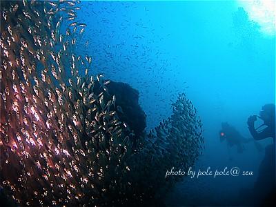 f:id:polepole-at-sea:20211016204019j:plain