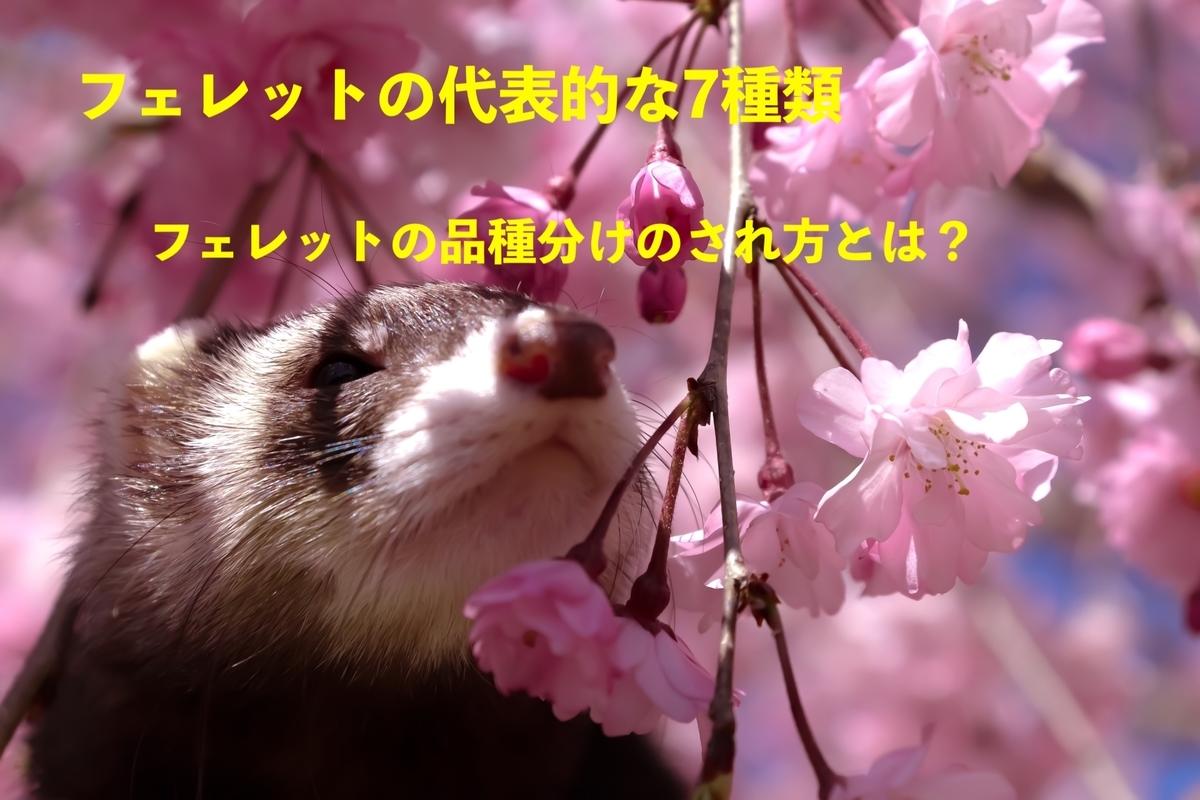 f:id:pompom_stk:20190702041513j:plain