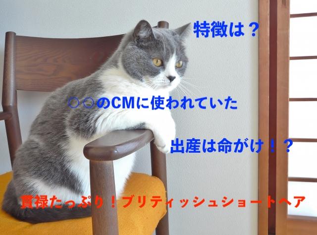 f:id:pompom_stk:20190712072218j:plain