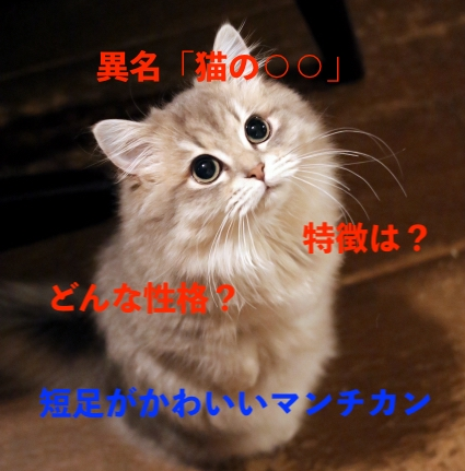 f:id:pompom_stk:20190716032149j:plain