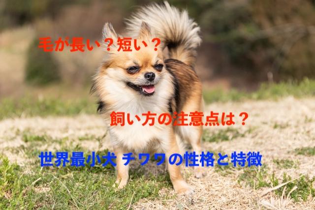 f:id:pompom_stk:20190822060848j:plain