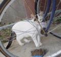 またまた自転車置き場