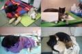 ポーランドの、病気の動物達に寄り添う猫。