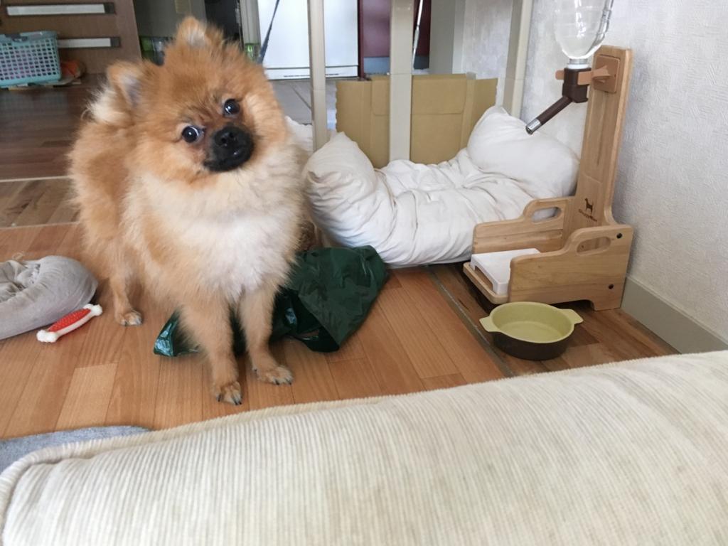 f:id:pon_ishikawa:20160805194549j:plain