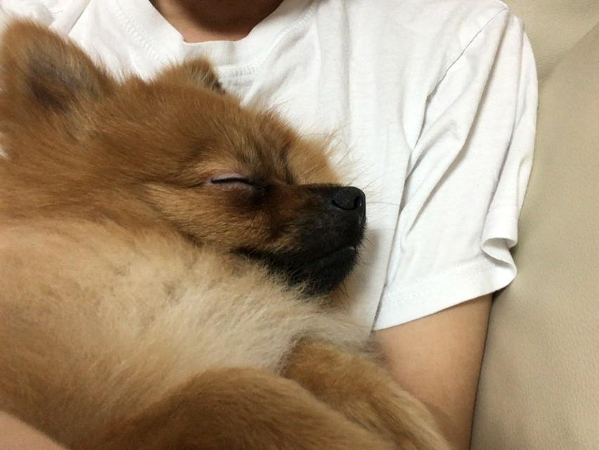 f:id:pon_ishikawa:20161004184435j:plain