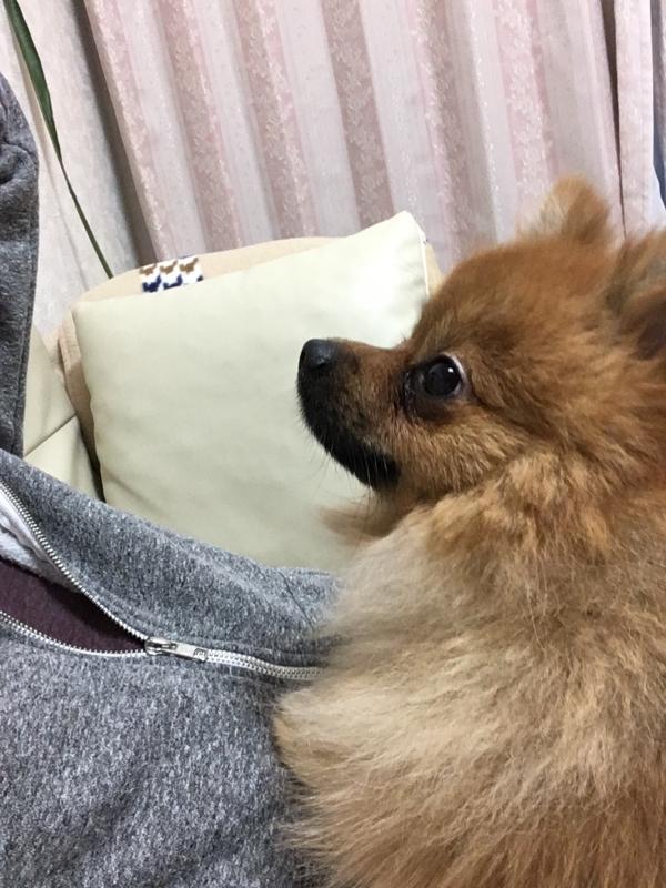 f:id:pon_ishikawa:20161112180216j:plain