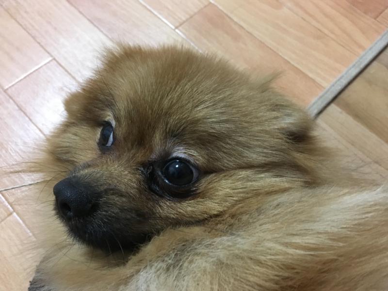 f:id:pon_ishikawa:20161223233152j:plain