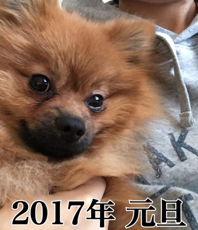 f:id:pon_ishikawa:20170101080019j:plain