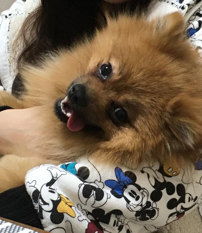 f:id:pon_ishikawa:20170109145141j:plain