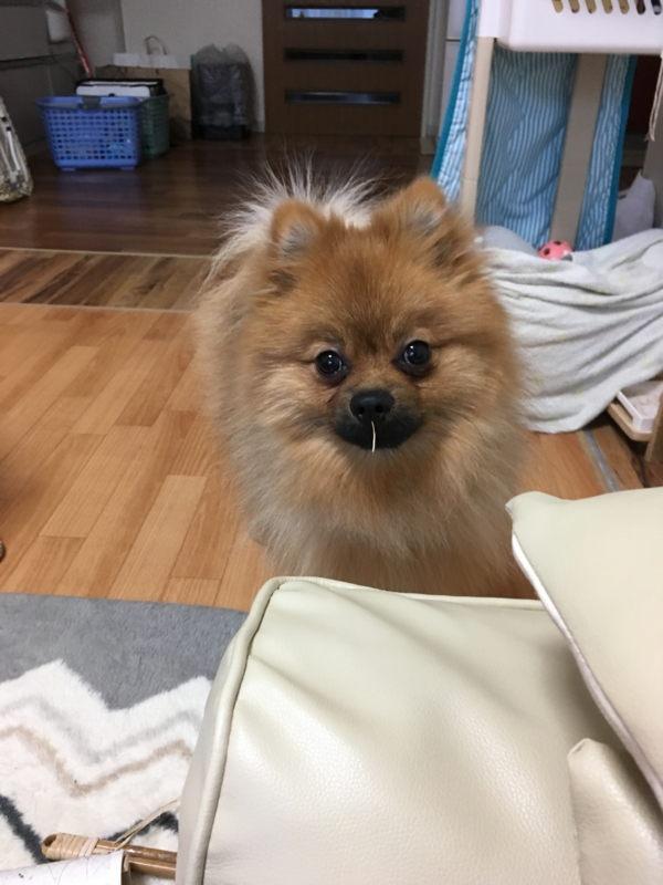 f:id:pon_ishikawa:20170110203255j:plain