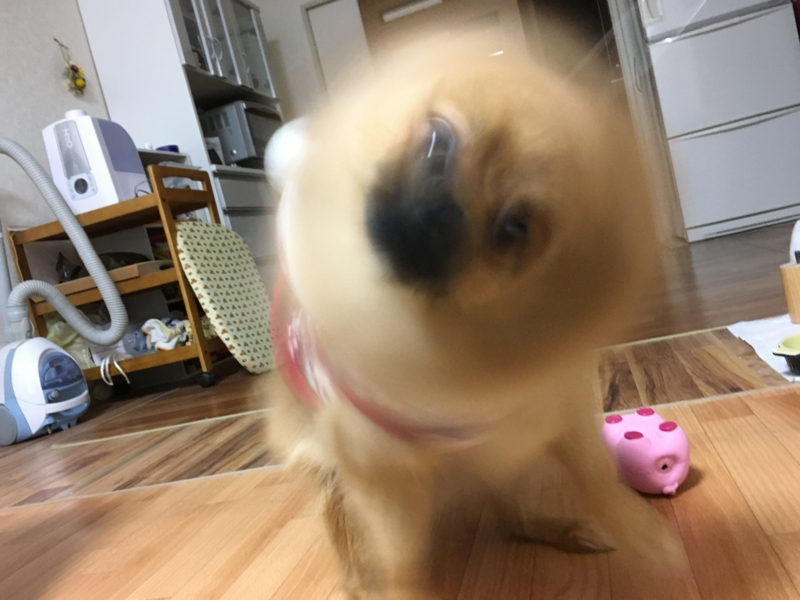 f:id:pon_ishikawa:20170126202148j:plain
