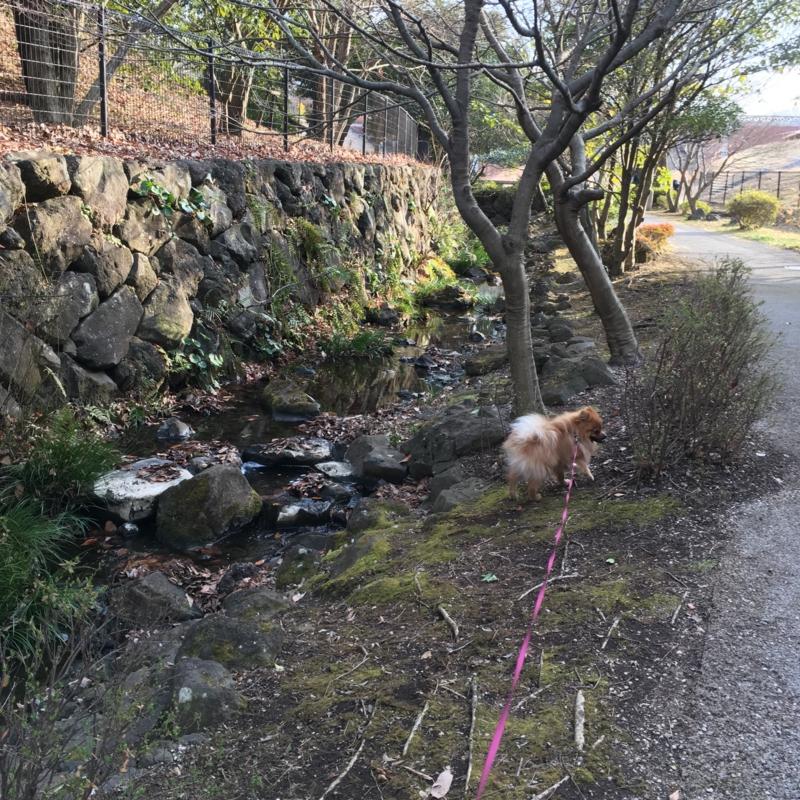 f:id:pon_ishikawa:20170315140512j:plain
